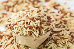 Whole grains rice Stock Photography