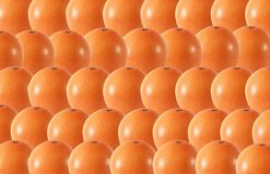 Whole grapefruit fruits abstract seamless pattern Royalty Free Stock Image