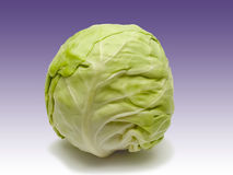 Whole green cabbage Stock Photography