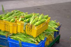 Whole green unripe corn stock photography