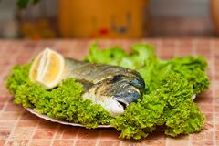 Whole griled dorada fish Stock Images