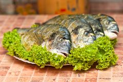 Whole griled dorada fish Royalty Free Stock Photo