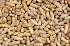 Whole groundnuts Royalty Free Stock Photo