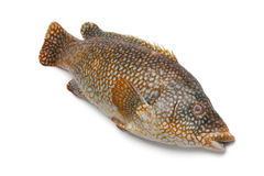 Whole grouper fish Royalty Free Stock Photography
