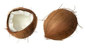 Whole and half broken coco nut. Coconut realistic vector illustration, whole and half cracked broken coco nut, isolated on white background. Set for advertising stock illustration