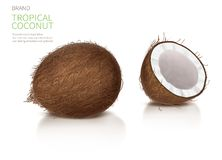 Whole and half broken coco nut. Coconut realistic vector illustration, whole and half broken coco nut with reflection, isolated on white background, and brand royalty free illustration