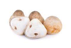 Whole and half cut raw mushroom on white background. Whole and half cut raw mushroom on a white background Royalty Free Stock Image