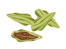 Whole and Half of Fresh Cardamom Pods Royalty Free Stock Photo