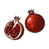Whole and half garnet fruit with seed. Vector engraving. Whole and half garnet with seed. Vector color vintage engraving illustration for menu, poster. Isolated Stock Images