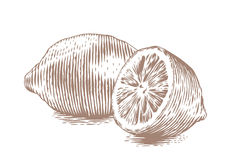 Whole and half lemon. Drawing of whole and half lemon on the white background Stock Photos
