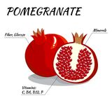 Whole, and half pomegranate fruit with nutrients  on white background. Carton vector illustration. Whole, and half pomegranate fruit  on white background Stock Images