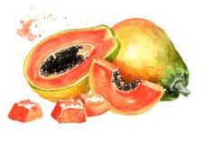 Whole, half and sliced sweet ripe papaya fruit. Watercolor hand drawn illustration isolated on white background.  royalty free illustration