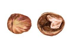 Whole and half walnut Royalty Free Stock Photos