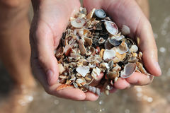 Whole handful of small sea shells Royalty Free Stock Photography