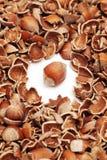Whole hazelnut and cracked shells Royalty Free Stock Image