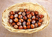 Whole hazelnuts in basket Royalty Free Stock Photo