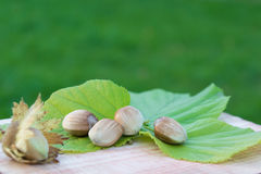 Whole hazelnuts with leaves on the wooden board Stock Photography
