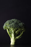 Whole Head of Broccoli Standing Upright on Stem against Black Ba Stock Photo