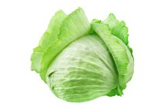 Whole head of green leafy cabbage on white background isolated close up, round ripe white headed cabbage with open leaves. Fresh vegetable design element stock image