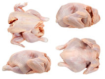 Whole hen Stock Images