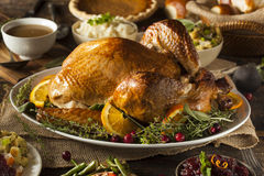 Whole Homemade Thanksgiving Turkey royalty free stock image