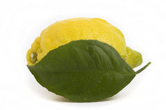 Whole lemon leaf with drops Royalty Free Stock Image