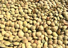 Whole lentils Stock Image