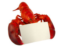 Lobster with Menu Card. Whole lobster holding a blank recipe or menu card isolated on white Stock Photography