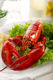 Whole lobster with salad Royalty Free Stock Photos