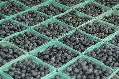 Whole lot of blueberries Stock Photo