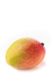 A whole mango against a white background. One whole red and yellow mango with water droplets on a white background Stock Photo