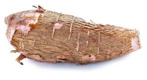 Whole manioc (cassava) isolated on white background Stock Image