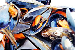 Whole mussels Stock Images