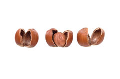 The whole nut among a shell Royalty Free Stock Photography