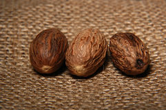 Whole nutmeg Stock Image