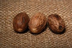 Whole nutmeg. Still life with nutmeg Stock Image