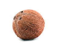 A whole nutritious coconut, isolated on a white background. Healthful, fresh and organic brown coconut. A whole, delicious coconut. Close fresh coconut Royalty Free Stock Photo