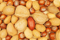 Whole nuts Stock Image