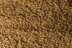 Whole Oat Horse Feed Stock Image