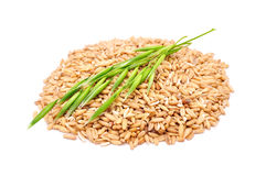 Whole Oats And Ear Stock Image