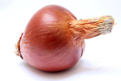 Whole onion Royalty Free Stock Image