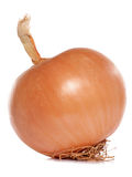 Whole onion Stock Photos