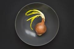 Whole onion Stock Photos