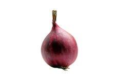Whole onion tube on white Royalty Free Stock Image