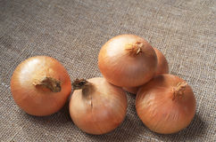 Whole onions close up Stock Images