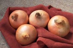 Whole onions closeup Stock Photography