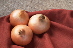 Whole onions closeup Stock Images