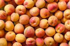 Whole orange apricots with red blush as a background from above. Royalty Free Stock Photography