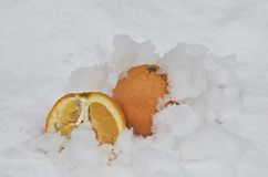 Whole orange and  half orange fruit refrigerate in the snow-drift at garden Royalty Free Stock Photography