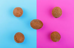 Whole and organic coconuts on blue and pink background. Five whole, fresh, organic and tropical fruits of coconuts. Exotic cocos. Stock Image
